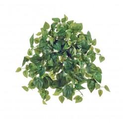 Филодендрон Денс зеленый ампельный