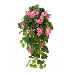 Ампельные, вьющиеся растения