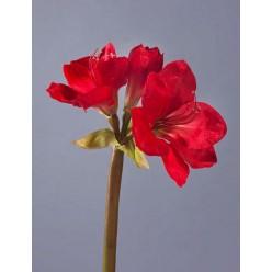 Амариллис темно-красный в-77 см, 2цв 1бут 12/48