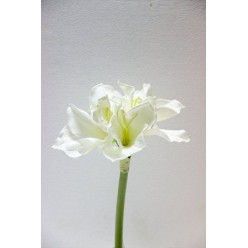 Амариллис искусственный Белый 70 см