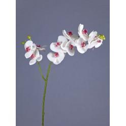 Орхидея Фаленопсис белая с роз.сердцевинкой ветвь двойная в-88 см, 9цв3 бут,3цв2 бут 12/48