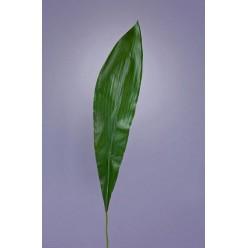 Лист Аспидистры д-88 см (лист 58х13 см) 12/240