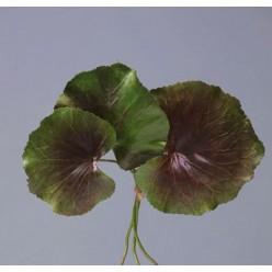 Листы Галакса зелено-бордовые 3 шт. в-24, д-от 10 до 12 см 24/96