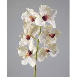 Орхидея Ванда крем с крапинами бордо в-57 см, 6цв 12/72