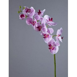 Орхидея Фаленопсис Мидл белая с сирен. крапинами в-76 см 9цв,3бут 6/36