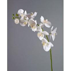 Орхидея Фаленопсис Мидл белая в-76 см 9цв,3бут 6/36