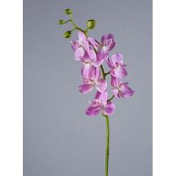 Орхидея Фаленопсис Элегант розово-белая в-70 см 7 цв,4бут 12/84