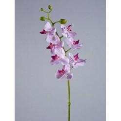 Орхидея Фаленопсис Элегант белая с сирен.крапинами в-70 см 7 цв,4бут 12/84