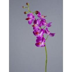 Орхидея Фаленопсис Элегант светло-фиолет в-70 см 7 цв,4бут 12/84
