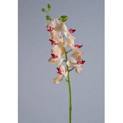 Орхидея Фаленопсис Элегант бледно-золотист. с бордо в-70 см 7 цв,4бут 12/84