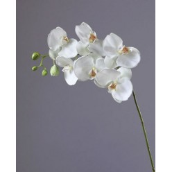 Орхидея Фаленопсис белая в-100 см 6цв,4бут (д-10-12см) 8/48