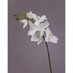 Орхидея Фаленопсис Adelaide белая в-65 см 7цв 5бут 12/96
