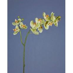 Орхидея Фаленопсис св.лайм ветвь двойная в-88 см, 9цв3 бут,3цв2 бут 12/48