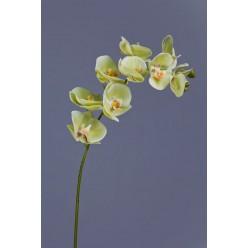 Орхидея Фаленопсис св.лайм ветвь 74 см 9цв3бут 12/48