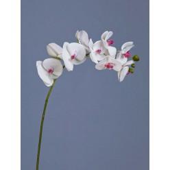 Орхидея Фаленопсис белая с розовой сердцевинкой ветвь 74 см 9цв3бут 12/48