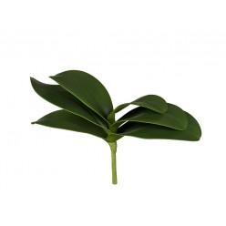Листья Орхидеи Фаленопсис малые в-17 см (6 листов в-9,ш-25 см) 12/60