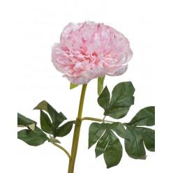 Пион махровый нежно-розовый в-60 см 1цветок д-13 см 12/72