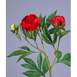 Пион красно-бордовый ветвь 60 см 1цв 2бут д-10,7,3 см 12/60