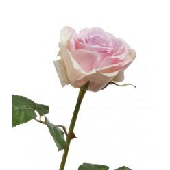 Роза Верди нежно-сиренево-розовая с кремовым в-58 см бутон в-7,д-10 см 12/72
