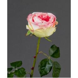 Роза Джема ярко-розовая со св.лаймом в-56 см бутон в-7,д-11 см 12/72