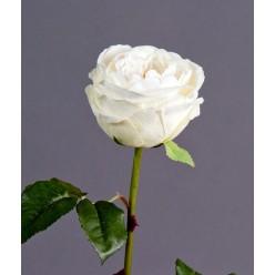 Роза Джема белая ваниль в-56 см бутон в-7,д-11 см 12/72