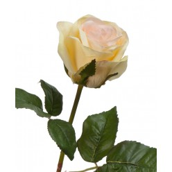 Роза Джулии нежно-персиковая с лимонным в-53 см 1цв в-6,д-8 см 12/144