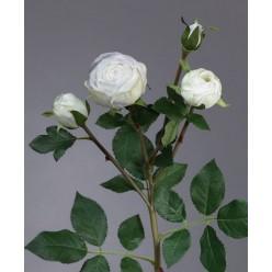 Роза Пале-Рояль ветвь бело-зеленая в-47 см 3цв, 1бут12/60