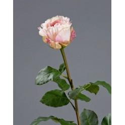 Роза Английская нежно-персиково-розовая в-66 см, бутон в-6,5, д-7 см 6/24