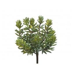 Суккулент Седум куст зеленый в-11, д-12/15 см 12/192 IRTR-20.091609
