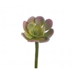 Мини-суккулент Эониум Декорум св.зелено-розовый в-2,5, д-5 см 36/360