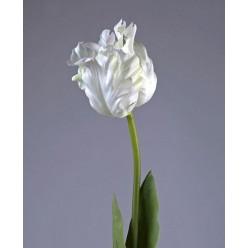 Тюльпан Попугай белый 77 см в-10 см 12/72