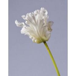 Тюльпан Попугай белый 80 см, в-10 см 12/48