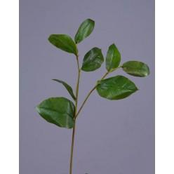Ветвь Салала с зелеными листами в-40 см 24/144