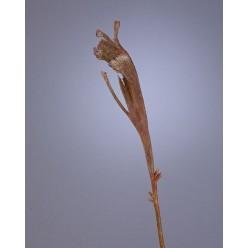 Ветка Салекса коричневая в-55 см 12/96