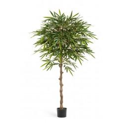 Бамбук Новый зонтичный