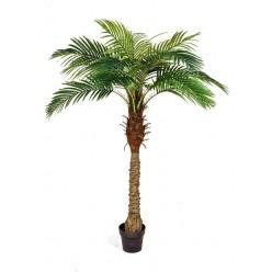 Финиковая пальма Новая