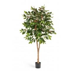 Кофейное дерево с плодами 180 см 2/2