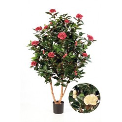 Камелия Японика темно-роз 150 см 2/2