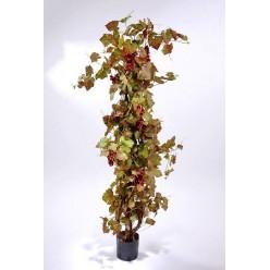 Виноградная лоза с красным виноградом