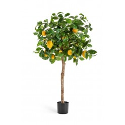 Лимонное дерево с плодами