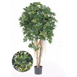 Шеффлера зонтичная зеленая