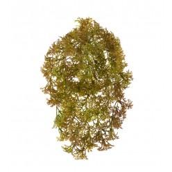 Ватер-грасс (Рясковый мох) куст светло-коричнево-зеленый (пластик) д-15/22 см, ш-10/17 см 24/240