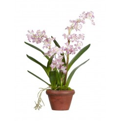 Орхидея Дендробиум сиренево-белая в-60 см в терракот.кашпо 1/2
