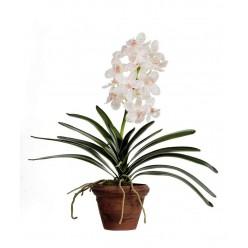 Орхидея Ванда кремовая с розовой крапинкой в-43 см в терракот.кашпо 1/4