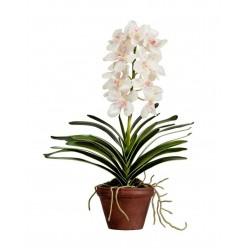 Орхидея Ванда кремовая с розовой крапинкой 2 ветки в-52 см в терракот кашпо 2/4