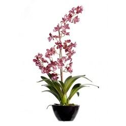 Орхидея Дендробиум бургундия с белым в-65 см в коричнево-бордовом кашпо 1/2
