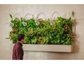 Вертикальное озеленение у Вас дома