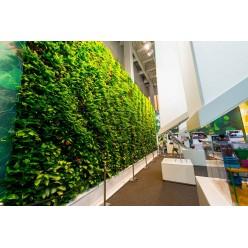 Озеленение павильона Индии на международной выставке ЭКСПО