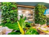 Озеленение из живых растений