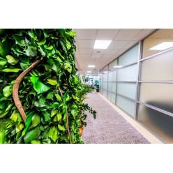 Озеленение из стабилизированных растений